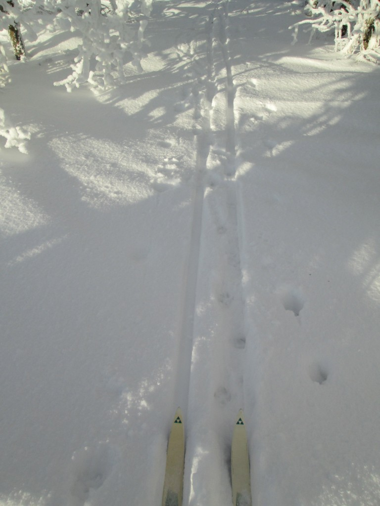 truth be told, this is last year's ski...same skis, same legs!!