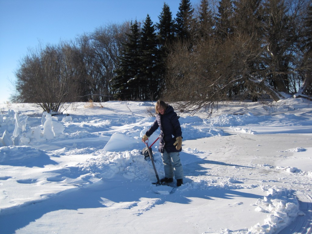 Debra, intrepid shoveler!!!
