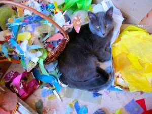 What is Smokey the COLLAGE cat's favourite colour??
