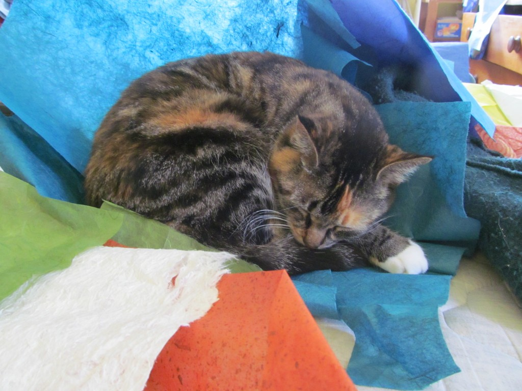 Snickers - Smokey the cat's mom. Sleeping in rice paper is a hereditary trait.