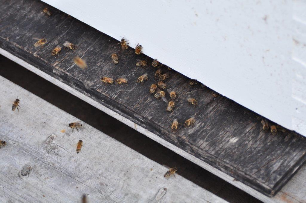 Bees, who are (thankfully) NOT in the trees