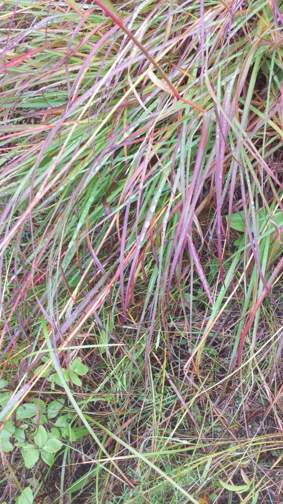 the colours of the grasses